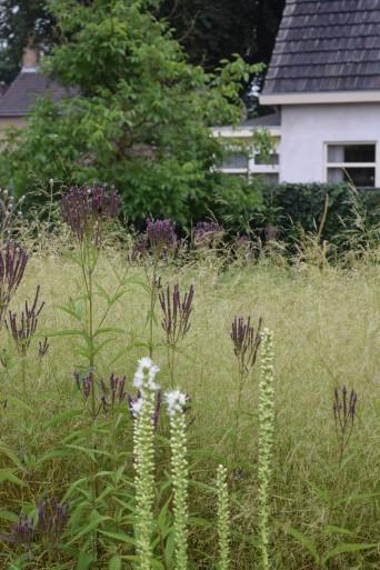 Verbena hastata met Liatris spicata en Deschampsia cespitosa